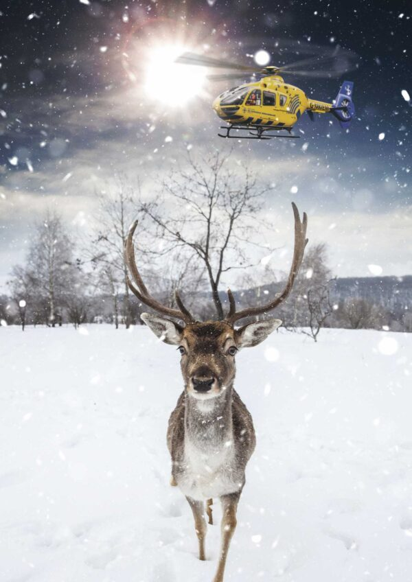Image of a stag walking through the snow with a helicopter above.